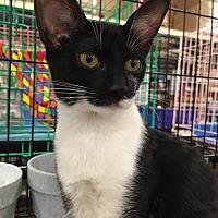 Adopt A Pet :: Nora - Boynton Beach, FL