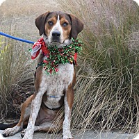 Adopt A Pet :: Biscuit - Charelston, SC