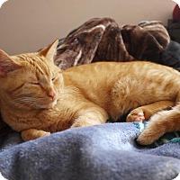Adopt A Pet :: Simbah - Vancouver, BC