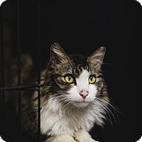 Adopt A Pet :: CALVIN - Phoenix, AZ