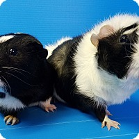 Adopt A Pet :: Crockett and Tubbs - Lewisville, TX