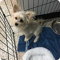 Adopt A Pet :: Kimme - Thousand Oaks, CA