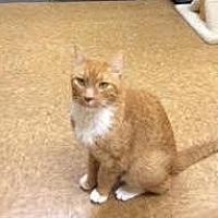 Adopt A Pet :: Tucker - San Jose, CA