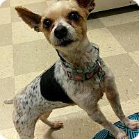 Adopt A Pet :: Ellie - Libby, MT