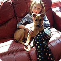 Adopt A Pet :: Ozzie - Hollis, ME