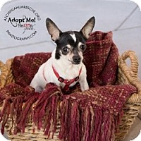 Adopt A Pet :: Patches - Mesa, AZ