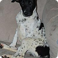 Adopt A Pet :: Bentley - Marlton, NJ