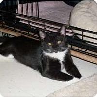 Adopt A Pet :: Jane - Island Park, NY