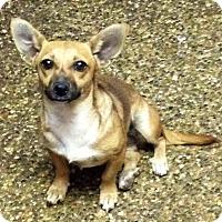 Adopt A Pet :: Demi - Fowler, CA