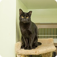 Adopt A Pet :: Russell - Chicago, IL