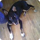 Adopt A Pet :: Todd