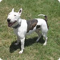 Adopt A Pet :: Champ - Copperas Cove, TX
