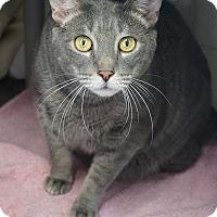 Adopt A Pet :: Hopper 'Dashing' - Mt Vernon, NY