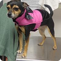 Adopt A Pet :: Tess - Manning, SC