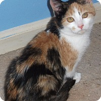 Adopt A Pet :: Sallie-Jo - Colmar, PA
