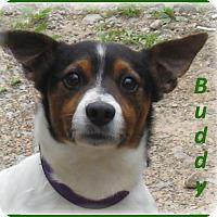 Adopt A Pet :: Buddy - Marlborough, MA