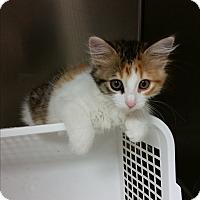 Adopt A Pet :: Yuka - Chippewa Falls, WI