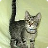 Adopt A Pet :: Sabrina - Powell, OH