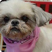 Adopt A Pet :: Honey Harris - Urbana, OH