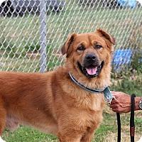 Adopt A Pet :: Major - Elyria, OH