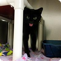 Adopt A Pet :: Willamina - Chippewa Falls, WI