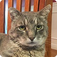 Adopt A Pet :: Tex - Worcester, MA