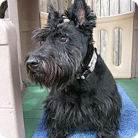Adopt A Pet :: Paden & Piper - Dallas, TX