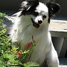 Adopt A Pet :: Dixie (in GA)