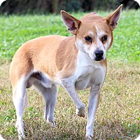 Adopt A Pet :: Landry ADOPTION PENDING - Waldorf, MD