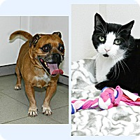 Adopt A Pet :: Willie & Sokka - Forked River, NJ