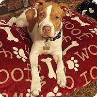 Adopt A Pet :: Jaxson - Orlando, FL
