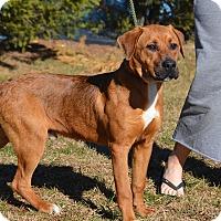 Adopt A Pet :: Oliver - Sparta, NJ