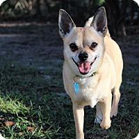 Adopt A Pet :: Chi Chi - Weeki Wachee, FL