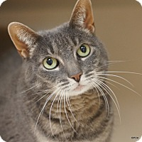 Adopt A Pet :: Abby - East Hartford, CT
