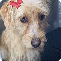 Adopt A Pet :: Jazzy - San Antonio, TX