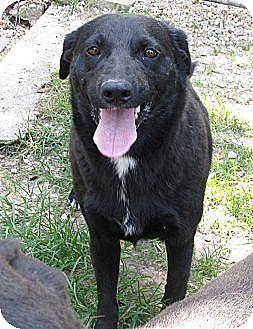Australian Shepherd Mix Dog for adoption in Bay Springs, Mississippi - S604 Duchess