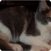 Adopt A Pet :: Majesta - Acme, PA