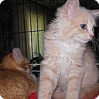 Adopt A Pet :: Mia - CARVER, MA