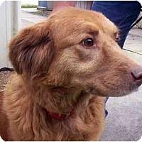 Adopt A Pet :: TRUDI - Jacksonville, FL