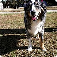 Adopt A Pet :: Henry - Sarasota, FL