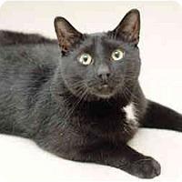 Adopt A Pet :: Franklin - Markham, ON