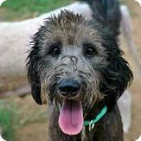Adopt A Pet :: Admiral Thor - Austin, TX