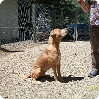Adopt A Pet :: Kristoffersen - Covelo, CA