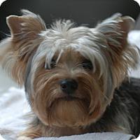 Adopt A Pet :: Kia - Providence, RI
