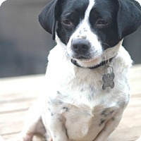 Adopt A Pet :: Taylor-MEET HIM!! - Norwalk, CT