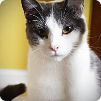 Adopt A Pet :: Hannah - Xenia, OH