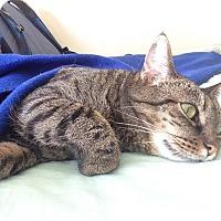 Adopt A Pet :: Abby - Stafford, VA