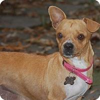 Adopt A Pet :: Josie - Memphis, TN