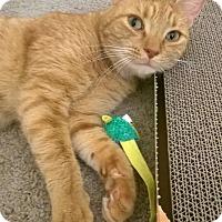 Adopt A Pet :: Cornelius - Richmond, VA