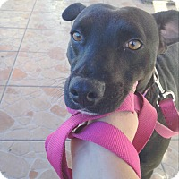 Adopt A Pet :: Bailey - San Diego, CA